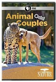 Cover image for Animal Odd Couples